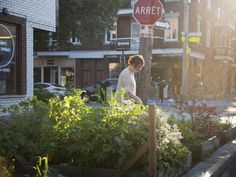 The growing pains of urban agriculture