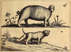 Fortunio Liceti's Monsters (1665) | The Public Domain Review