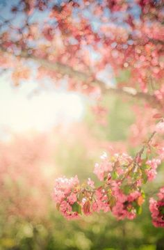 spring nature photography print