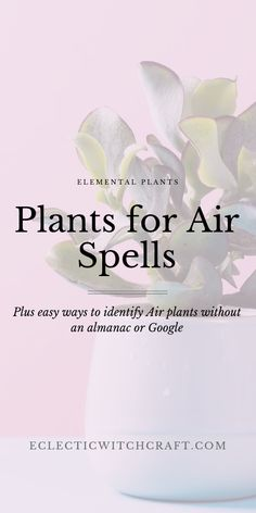 Herbs and Plants for Witchcraft: Air Element Herbs - Eclectic Witchcraft Start your gardening adventure right by learning the elemental correspondences of the plants you want to grow. Find the perfect indoor plants for air. Witchcraft Herbs, Green Witchcraft, Magick, Learn Astrology, Astrology Signs, Air Magic, Money Magic, Love Spells, Magic Spells