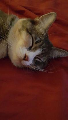 Relaxed Clara