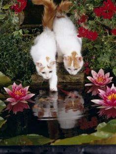 Miroir mon beau miroir ...