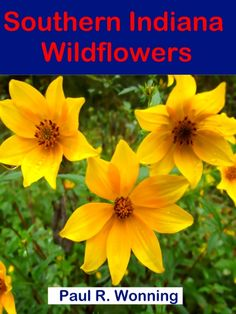 A Year in Wildflowers Series Learn to identify many of the common southern Indiana wildflowers using this great guide. The format presents the flowers as they bloom, from early spring until the last blooms of autumn. Early Spring, Spring Summer, Spring Wildflowers, Great Christmas Gifts, Garden Spaces, Native Plants, Flower Pots, Wild Flowers, Indiana