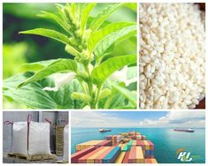 Sesame Seeds Market Report 2017- A year in review & A year ahead #SesameSeeds #MarketReport #SesameSeedsExporters #HLAgro #ImportandExport #OilSeeds #FoodIndustry #SesameSeedsMarket2017