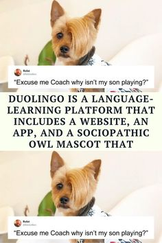 Last summer there seemed to be a disturbing 'trend' of middle-aged white women going viral Funny Dog Photos, Dog Pictures, Funny Dogs, Funny Humor, Witty Jokes, Corny Jokes, Photo Caption, Ninja Funny, Funniest Jokes