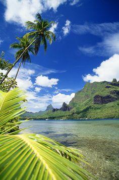 ✮ French Polynesia - Tahiti, Moorea, Bali Hai with palm tree in foreground