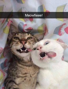 40 Funny Cats To Brighten Up Your Day - cat - Cute cat I Love Cats, Crazy Cats, Cool Cats, Silly Cats, Baby Animals, Funny Animals, Cute Animals, Gato Animal, Photo Chat