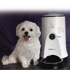 PET STATION Smart Dog Cat Automatic Food Feeder Feeding Machine *** Want additional info? Click on the image.
