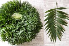 Green Inspiration #Chico Jumbo www.adomex.nl Green powers!