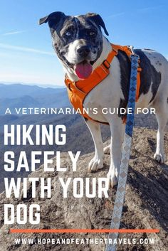 A small animal veterinarian's practical advice and helpful tips for hiking safely with your dogs, covering everything from appropriate gear, first aid, nutritional requirements, and etiquette. #campingwithdogs #hikingwithdog