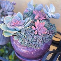 Succulents | Succulent garden| Succulents indoor | succulents in containers |Succulents diy | 1004
