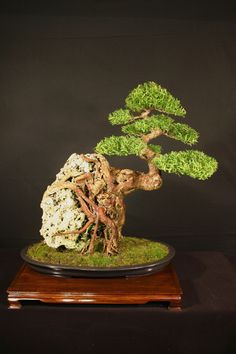 Bonsai - not to miss!!