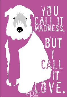 Love me some wheaten madness!  So cute - but purple just doesn't work for me!