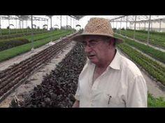 Plantas que curan, plantas prohibidas (con Josep Pàmies) - YouTube