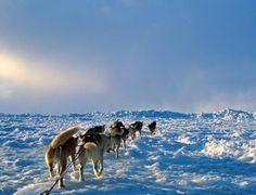 The Iditarod: A Mini-Unit