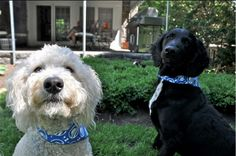 If you're a pet lover and you're for Obama, this is the page for you: http://OFA.BO/MPyGcD