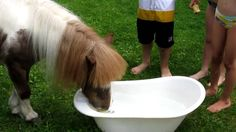 Appelhappen Misty, is m'n pony! luf u!