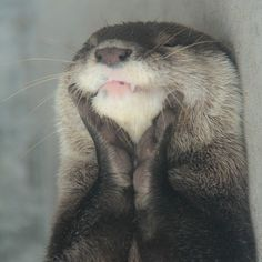 I could definitely do with an otter in my life.