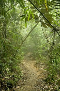 Photo - Mata-Atlantica - Tijuca National Park, Brazil
