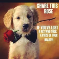 Dogs99 Com Dogs99pin On Pinterest