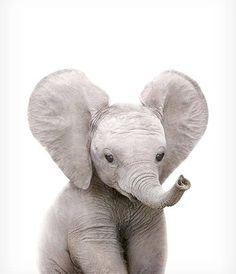 Safari nursery art Elephant print PRINTABLE art Safari