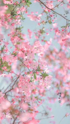 Wallpaper Nature Flowers, Flowery Wallpaper, Flower Background Wallpaper, Beautiful Flowers Wallpapers, Flower Phone Wallpaper, Anime Scenery Wallpaper, Aesthetic Pastel Wallpaper, Flower Backgrounds, Pretty Wallpapers