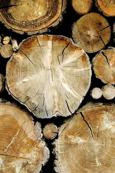 Earthtones...( shades of brown and beige )---cross sections of cut trees