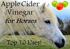 Once you discover all the benefits of apple cider vinegar (ACV) for horses, it's is really a no-brainer. Not only is it natural and affordable, but it's also a safe and fool-proof way to get into DIY horse care. If you're sick of spending all your hard earned money on expensive products that may have unnecessary (or questionable) ingredients, then ACV is a great place to start.