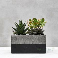 Beautiful Succulent Plant Gifts (Landcaped By MiniGardens) Indoor Plants Online, Buy Plants Online, Succulent Gifts, Succulent Care, Gifts Dubai, Forest Color, Stone Planters, Table Top Design, Sustainable Gifts