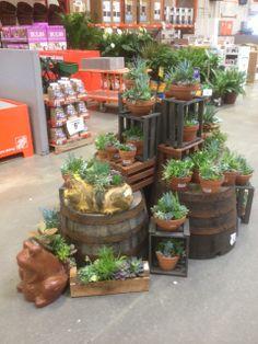 29 most inspiring home depot displays images home depot cactus rh pinterest com