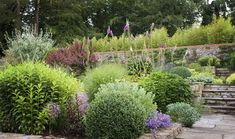 Country Garden in Surrey  By Hampshire based garden designer Jennifer Gayler.  Stone terraces are planted with shrubs, perennials and bulbs for all season interest - Box ball, Choisya ternata and Euphorbia wulfenii all feature.