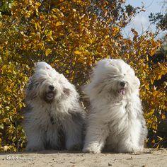 autumn pose...ft Rhea & Lisa - #RheaenLisa
