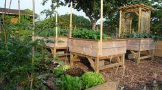 Mon potager en carré Tous les secrets d'une installation réussie Permaculture, Vegetable Garden, Garden Plants, Outdoor Furniture Sets, Outdoor Decor, Growing Herbs, Plantation, Worlds Of Fun, Shrubs