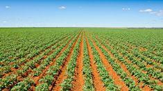 Polyram® DF Vineyard, Solar, Outdoor, Plant, Outdoors, Vine Yard, Vineyard Vines, Outdoor Living, Garden