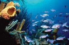 Holland America anuncia a los ganadores de Becas para la Investigación Marina