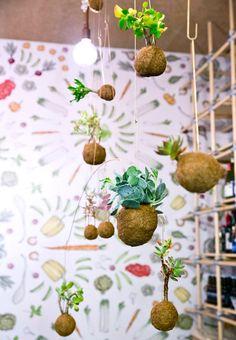 Kaja Skytte ville gøre op med ideen om, at planter kun kunne været i potter. Derfor skabte hun planetplanten - en finurlige og kærligt indspark til den klassiske plante. Få et indblik i processen bag. Organic Art, Plant Art, Diy Food, Grass, Succulents, Projects To Try, Diy Crafts, Plants, Design