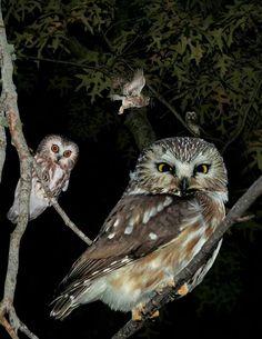 Owl prowl 2014