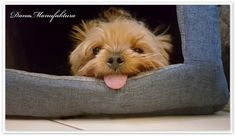 DanaManufaktura: Opowieść o pewnym psie...