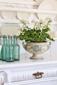 IT DOESN'T REALLY TAKE MUCH TO MAKE A STATEMENT IN YOUR HOME!! - THIS BEAUTIFUL PLANT IN AN OLD CASSEROLE DISH, PLUS THE VERY PRETTY COLOURED BOTTLES, LOOK ABSOLUTELY FABULOUS!!