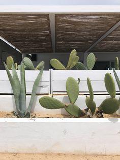 Formentera - Ibiza - Baleares - cactus - gardeninspo - white island Ibiza, Cactus Plants, Beach, Holiday, Prints, Inspiration, Biblical Inspiration, Vacations, The Beach