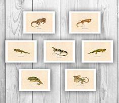 Chameleon art 7 reptile lizard prints decorative by PrintCorner