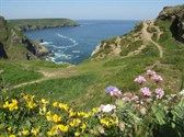 Cliff Flowers at Hell's Mouth, Cornwall. - Kelly's ice cream in the café, ponies in the field, panic as kids get too near to the edge for your comfort!