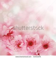 Fresh, pink, soft spring cherry tree blossoms on pink bokeh background. Very shallow DOF. by Beata Becla, via ShutterStock