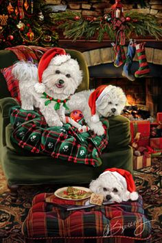 "New for 2014! Bichon Frise Christmas Holiday Cards are 8 1/2"" x 5 1/2"" and come in packages of 12 cards. One design per package. All designs include envelopes, your personal message, and choice of greeting. Select the inside greeting of your choice from the menu below.Add your custom personal message to the Comments box during checkout."