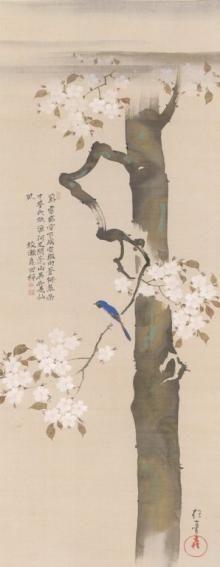 A bird in Sakura, by Hoitsu Sakai, a Japanese Painter from Rimpa school, 19th century, in Japan