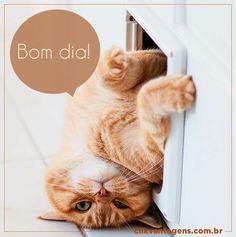Boa Terça pessoal. :)  #Bomdia