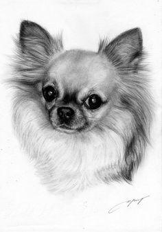 Chihuahua Painting - petdrawings