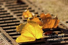 Orange Leaves Photograph by Svetlana Svetlanistaya  #Svetlanistaya #FallenLeaves #Nature #Autumn #PhotographyPrints #HomeDecor #InteriorDesign