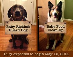 Baby announcement with help from the dogs. Signs were added in digitally.