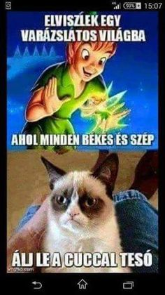 Sok volt a koksz mi? Grumpy Cat Humor, Sarcasm, Funny Cats, Haha, Have Fun, Comedy, Funny Pictures, Jokes, Entertaining